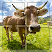 Game Best Free Jigsaw for Kids: Cows Puzzles APK for Windows Phone