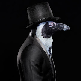 Piet the Penguin by Michal Challa Viljoen - Digital Art Animals ( person, zoo, advertising, edit, penguin, photography, composite, animal, photoshop,  )