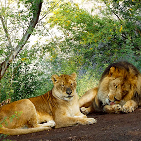 Quiet time together by Donna Probasco - Novices Only Wildlife (  )