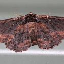 Sinister Moth