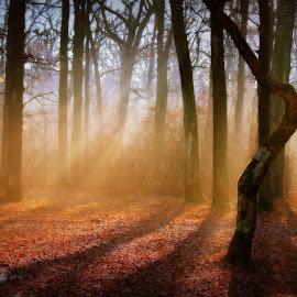 November... by Radita Watkinson - Landscapes Forests