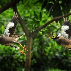 by Jovi Photograph - Animals Birds