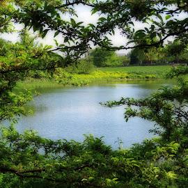 by Monika Mccormick  - Nature Up Close Trees & Bushes ( monika mccormick )
