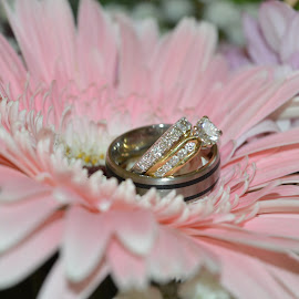 Rings sitting in a flower by Jodie Graham - Wedding Other ( gerbra, wedding, pink, rings, flower, engagement )