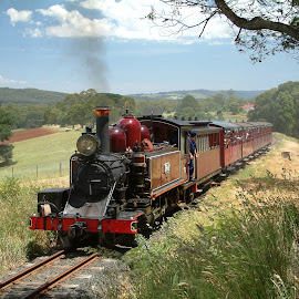Puffing Billy by Paul Bech - Transportation Trains ( puffing billy, locomotive, dandenongs, train, steam )