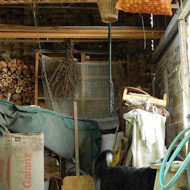 Shed  by Viktor Kesler - Novices Only Objects & Still Life ( shed dog clutter )
