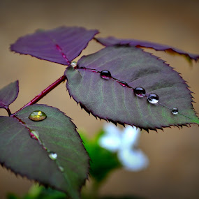by Parvesh Rana - Nature Up Close Leaves & Grasses
