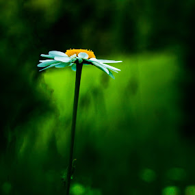 by Bojan Berce - Flowers Flowers in the Wild (  )