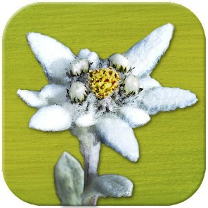 AlpineFlower Finder - Europe
