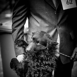 Before big moment by Ivan Cindrić - Animals - Dogs Portraits ( journalism, potrait, black and white, dog )