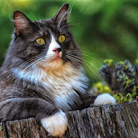 Reckless in the Woods by Twin Wranglers Baker - Animals - Cats Portraits