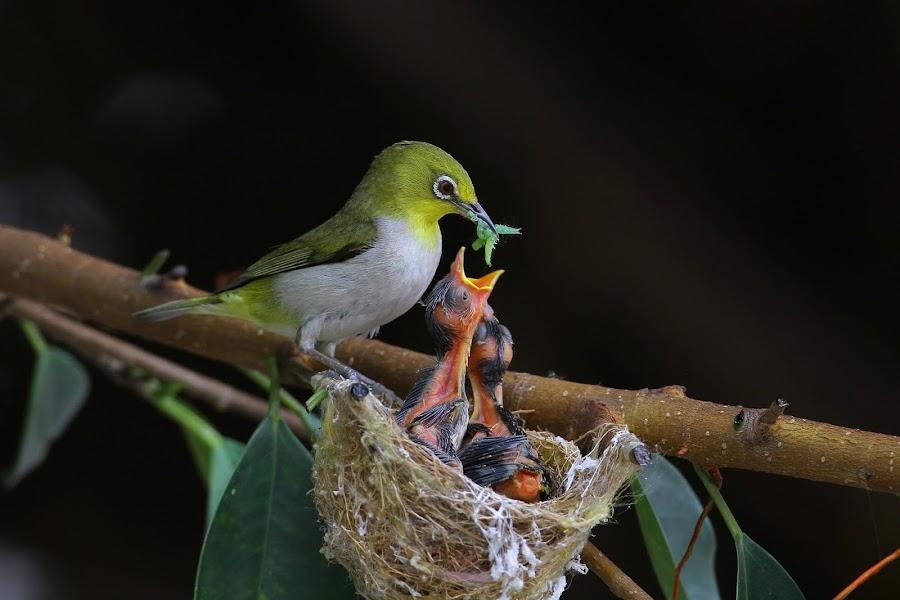 by Jack Wu - Animals Birds