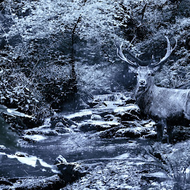 winter is coming  by Kevin Baxter - Digital Art Animals ( water, forests, winter, nature, snow, stag, river )