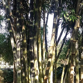 Bamboo 3 by Gail Marsella - Nature Up Close Gardens & Produce ( bamboo, green, san diego botanical garden, brown, garden )