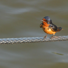Bird On A Rope by Diane Butler - Animals Birds