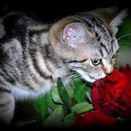 by Hilja Mulder - Animals - Cats Kittens
