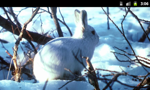 Bunny Rabbits - Live Wallpaper - screenshot