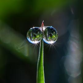 duo dew by Kawan Santoso - Nature Up Close Natural Waterdrops
