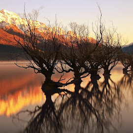 Willows of Glenorchy by Jomy Jose - Landscapes Waterscapes ( willows, queenstown, trees in water, south island, willows of glenorchy, snow mountain, paradise, glenorchy, new zealand )