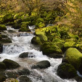 Gljun spring by Tina Avguštin - Landscapes Waterscapes ( water, nature, waterscape, green, landscape, spring )