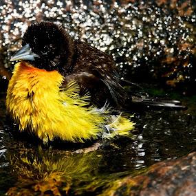 Taking a break  by Johann Bekker - Novices Only Wildlife