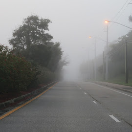 Foggy Morning Empty Road Streetlights On by Jill Nightingale - Transportation Roads ( lit, visibility, street lamps, street, road, travel, glow, morning, foggy, winter, fog, reduced, drive, empty, commute, on, light )