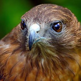 by John Larson - Animals Birds