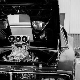 Car Show by Melissa Culp - Transportation Automobiles ( charger, engines, carshow, openhood, blackcar )