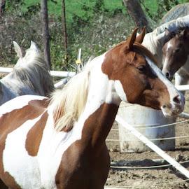 by Mark Hopkins - Animals Horses (  )