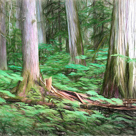 Cedar Walk by Brian Adamson - Digital Art Places ( ceadrs, digital art, trees, digital photography, ferns, digital, british columbia )
