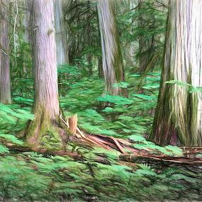 Cedar Walk by Brian Adamson - Digital Art Places ( ceadrs, digital art, trees, digital photography, ferns, digital, british columbia )