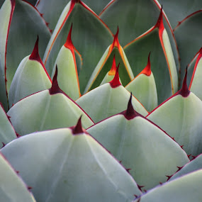 Get the Point? by Randi Hodson - Nature Up Close Other plants ( plant, green, cactus )