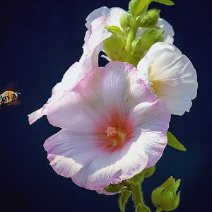 flowerbeee3- (2).jpg