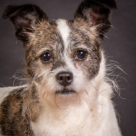 by Myra Brizendine Wilson - Animals - Dogs Portraits ( canine, foster dog, dogs, foster dog sinclair, pet, pets, sinclair, gcspca, dog, foster sinclair, greater charlotte spca )