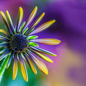 on colors by Carmelo Parisi - Nature Up Close Flowers - 2011-2013