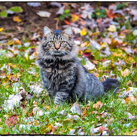 Blending in to fall by Deborah Felmey - Animals - Cats Portraits ( cat cats fall leaves posing )