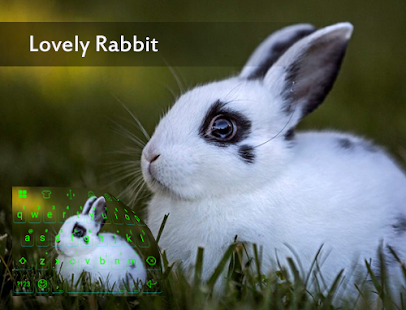 Lovely Rabit In Green Theme - screenshot