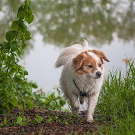 by Thomas Berwein - Animals - Dogs Running
