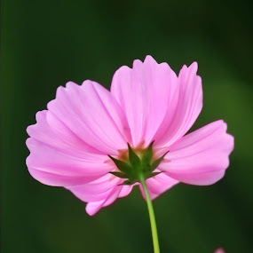 FLOWERS by Soumaya Karmakar - Flowers Flower Gardens