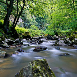 by Siniša Almaši - Nature Up Close Rock & Stone ( forest, nature, woods, tree, trees, water, stone, morning, rock, view, depth, stream, light, up close, river, landscape )