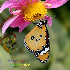 BUTTERFLY by SANGEETA MENA  - Typography Quotes & Sentences