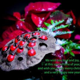 Merry Christmas 2 by Dave Walters - Typography Captioned Photos ( verse, colors, christmas, typography, lumix fz2500 )