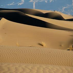 Lovely scenery by Hamed Ghalandar - Landscapes Deserts ( iran, desert, rig e jen desert, espilat )