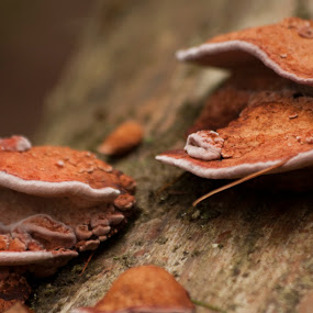 Mountain Clams by Tiffany Lett - Nature Up Close Mushrooms & Fungi ( great smoky mountains, fungi, tree )