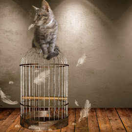 Cat and cage by Carmen Liebenberg - Digital Art Animals ( bird, cat, digital art, fine art, cage, feathers, composite, animal )
