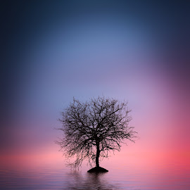 One tree by Bess Hamiti - Nature Up Close Trees & Bushes ( tree graphic, lawn, bright, over, planet, sky, tree, nature, autumn, foliage, weather, poppies, surreal, light, hill, grass, agriculture, horizon, lake, sunlight, apple tree, season, stars, view, flare, natural, moon, land, landscape, spring, sun, panorama, clean, fresh, sunny, oak, canola, green, beautiful, field, blue, sunset, outdoor, background, meadow, cloud, summer, sunrise, earth, autumn-leaves )