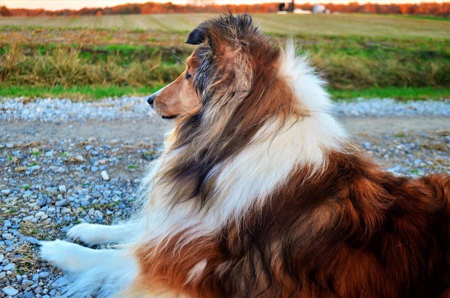 Walking Break by Tim Hall - Animals - Dogs Portraits