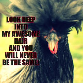 Just Own It by Ernie Kasper - Typography Quotes & Sentences ( hairdo, chicken, motto, feathers, meme )