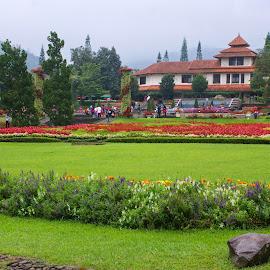 Nusantara Park by Mulawardi Sutanto - City,  Street & Park  City Parks ( park, nusantara, travel, flower, city )