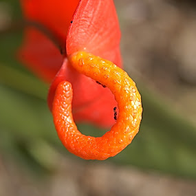 by Rajesh Dhungana - Nature Up Close Other plants (  )